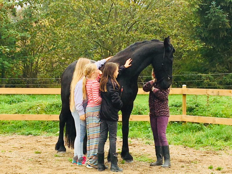 Kunsten at gå til hest Workshops for tweens