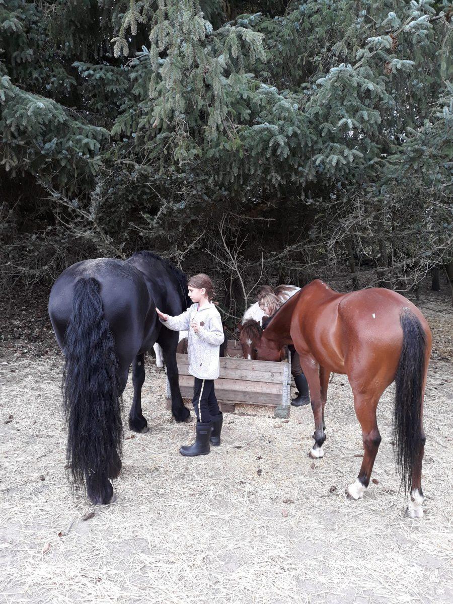 Pige nusser med heste til Luksusdag for dig og dit barn