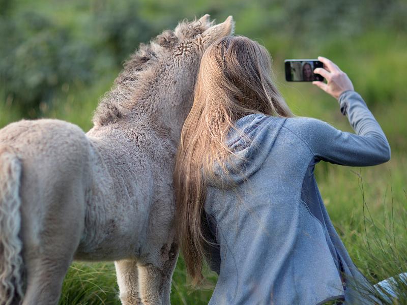 Hestekræfter Hestekraefter Workshops Selvværd nærvær heste Line Hummel